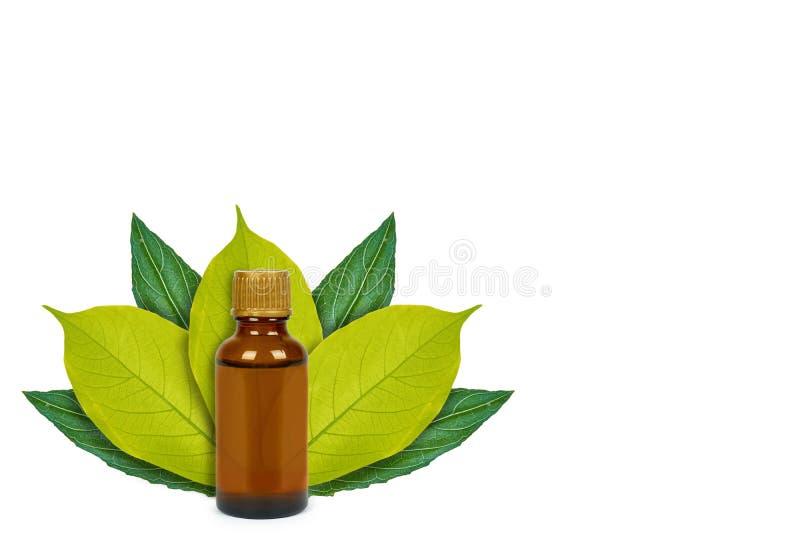 Botella con la medicina en el fondo de hojas verdes Aislado en blanco noción del origen natural fotografía de archivo libre de regalías