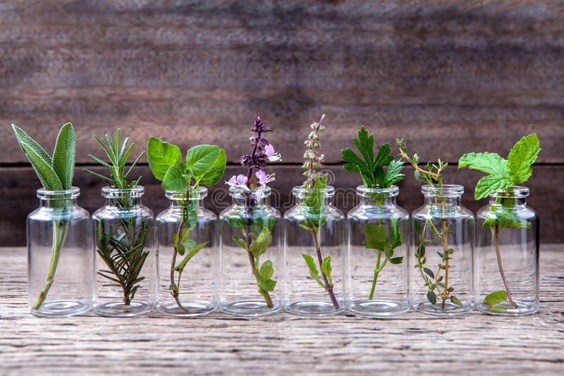 Botella de aceite esencial con la flor santa de la albahaca de las hierbas, flujo de la albahaca fotos de archivo libres de regalías