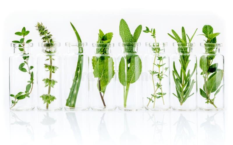Botella de aceite esencial con las hierbas, flor de la albahaca del limón, romero, imagenes de archivo