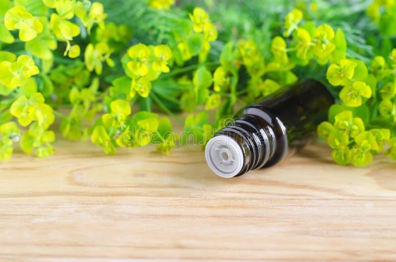 Botella de cyparissias del euforbio, extracto del spurge del ciprés (tinte del Milkweed, infusión, aceite herbarios) imagenes de archivo