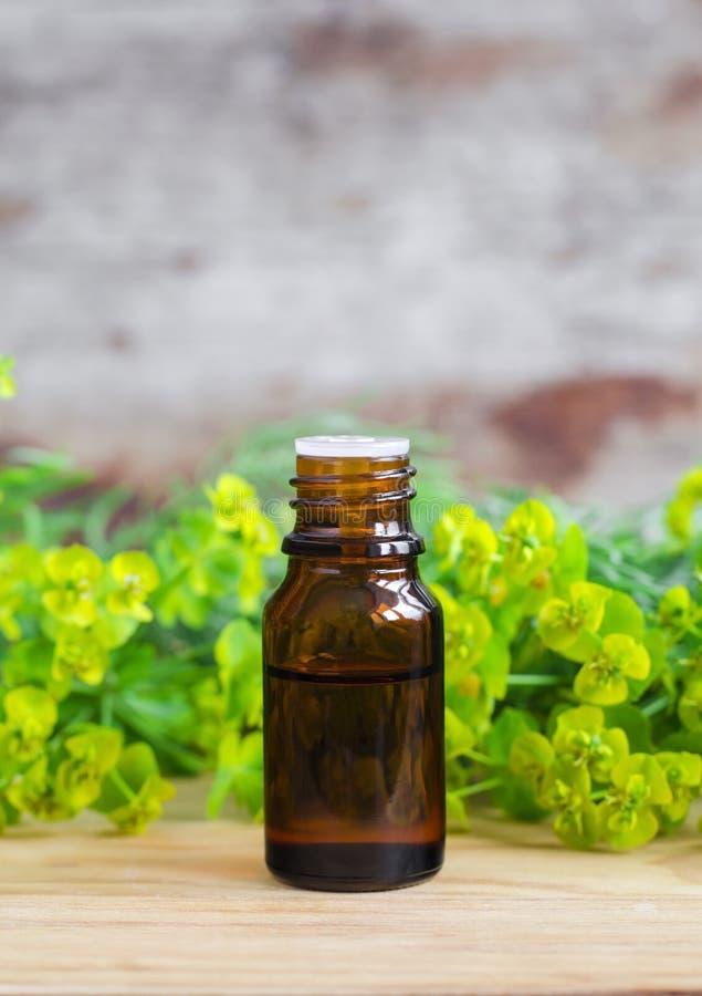 Botella de cyparissias del euforbio, extracto del spurge del ciprés (tinte del Milkweed, infusión, aceite herbarios) imagen de archivo