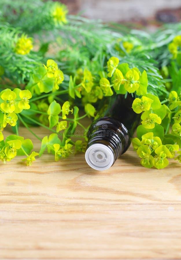 Botella de cyparissias del euforbio, extracto del spurge del ciprés (tinte del Milkweed, infusión, aceite herbarios) fotos de archivo