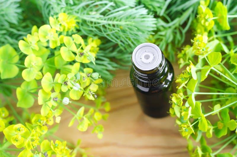 Botella de cyparissias del euforbio, extracto del spurge del ciprés (tinte del Milkweed, infusión, aceite herbarios) foto de archivo libre de regalías