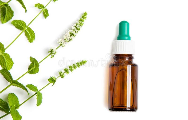 Botella de dropper de la medicina herbaria con las ramas verdes de la menta en el fondo blanco imagen de archivo libre de regalías
