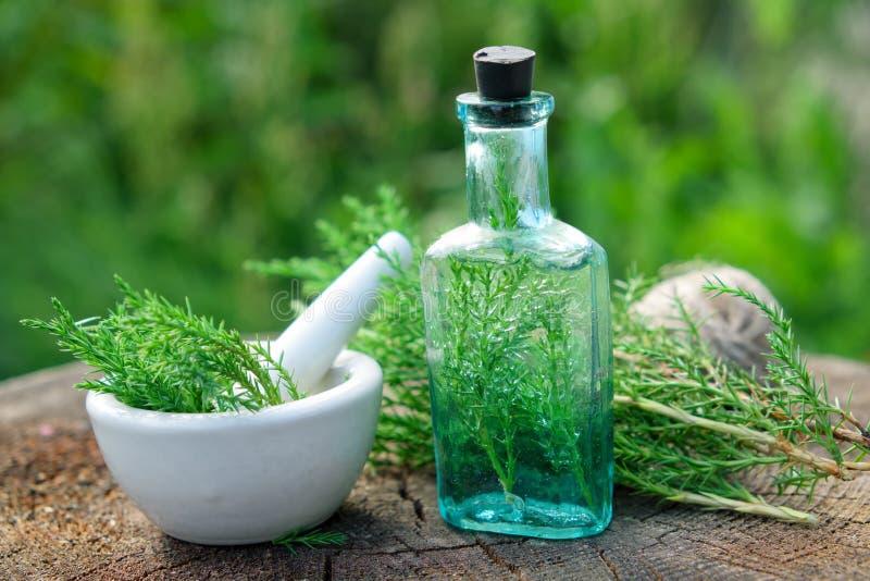 Botella de infusión o poción del enebro, mortero y ramitas communis del Juniperus imagen de archivo