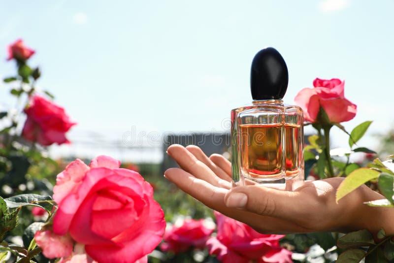 Botella de la tenencia de la mujer de perfume color de rosa de lujo entre las flores en jardín floreciente Espacio para el texto foto de archivo
