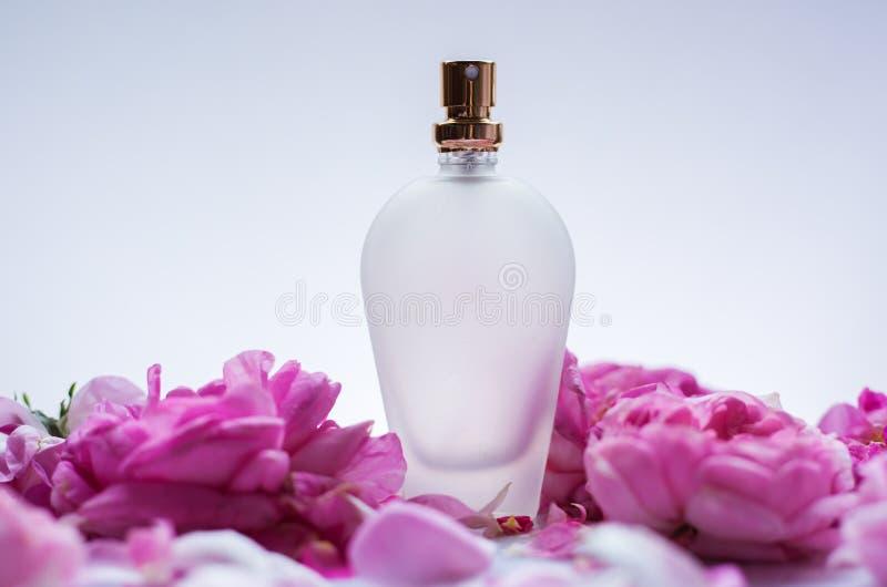 Botella de perfume en rosas rosadas de la flor Fondo de la primavera con luxu fotografía de archivo libre de regalías