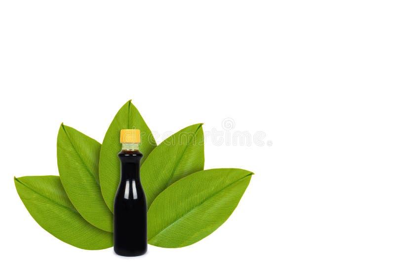 Botella de salsa de soja en el fondo de hojas verdes Aislado en blanco noción del origen natural imagen de archivo libre de regalías