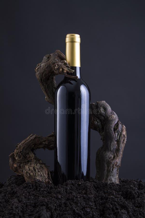 Botella de vino con la vid para abrazar la botella, del hogar y del fondo negro fotos de archivo