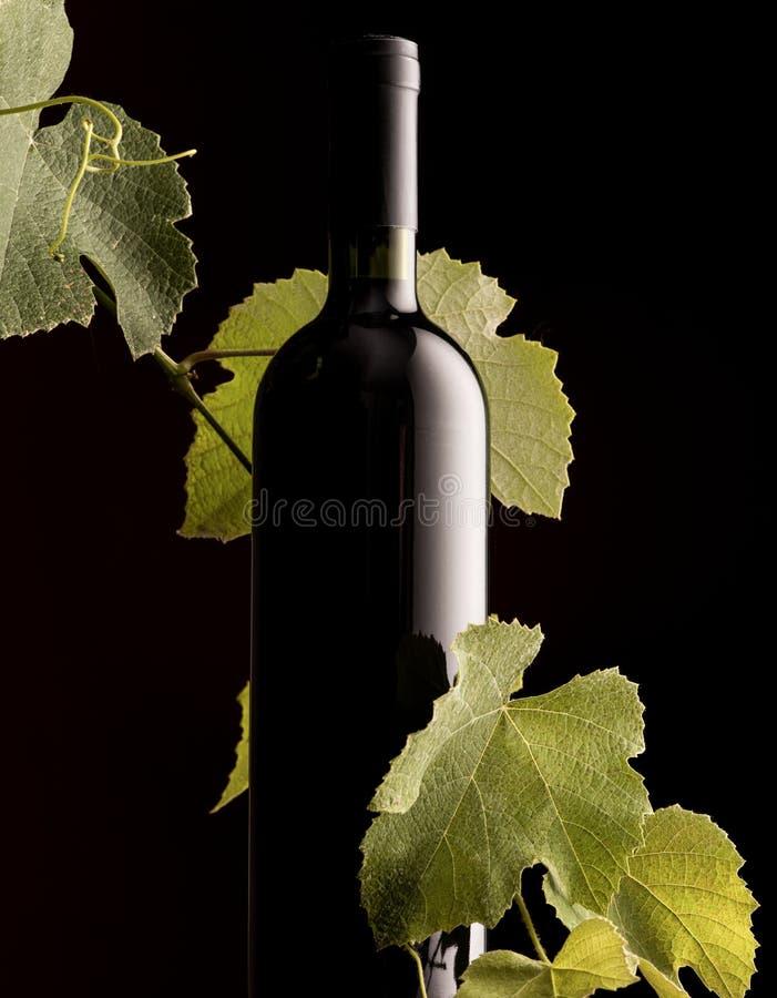 Botella de vino de Rew con la rama de la vid imágenes de archivo libres de regalías