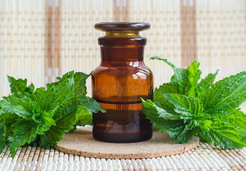 Botella del boticario con el extracto esencial del aceite de la menta, tinte, infusión La menta verde fresca se va cercano para a imágenes de archivo libres de regalías