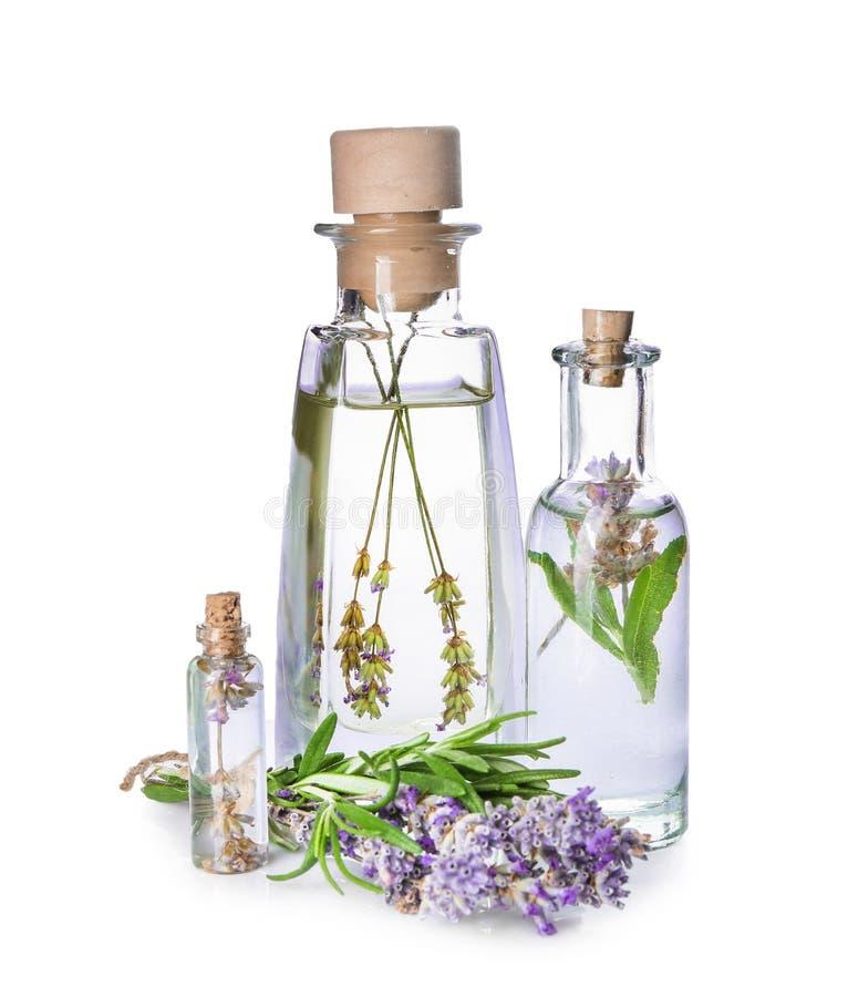 Botellas de aceite esencial con lavanda y romero en el fondo blanco fotografía de archivo libre de regalías