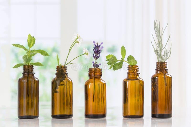 Botellas de Brown de aceite esencial con las hierbas frescas imagen de archivo libre de regalías