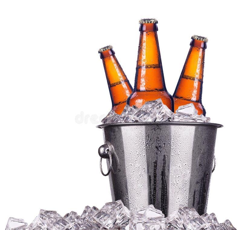 Botellas de cerveza en el cubo de hielo aislado fotografía de archivo