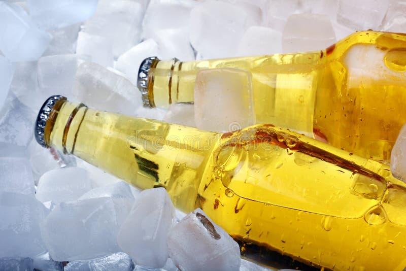 Botellas de cerveza en hielo fotografía de archivo libre de regalías