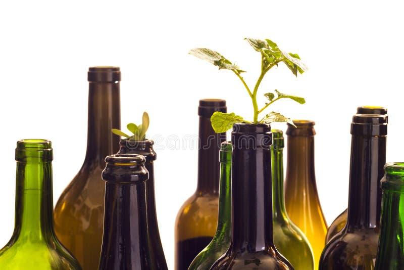 Botellas de cristal con la planta foto de archivo libre de regalías