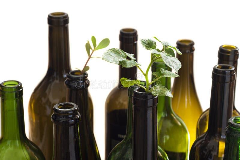 Botellas de cristal con la planta imagenes de archivo