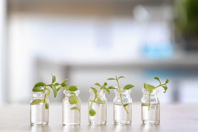 Botellas de cristal con las plantas en la tabla foto de archivo