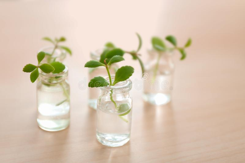 Botellas de cristal con las plantas en la tabla fotos de archivo
