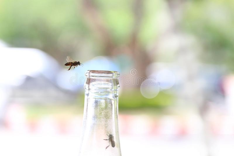 Botellas de cristal, conservadas con la mosca de abeja en el rasguño de soda de la ligamaza de la consumición en fondo verde del  fotos de archivo