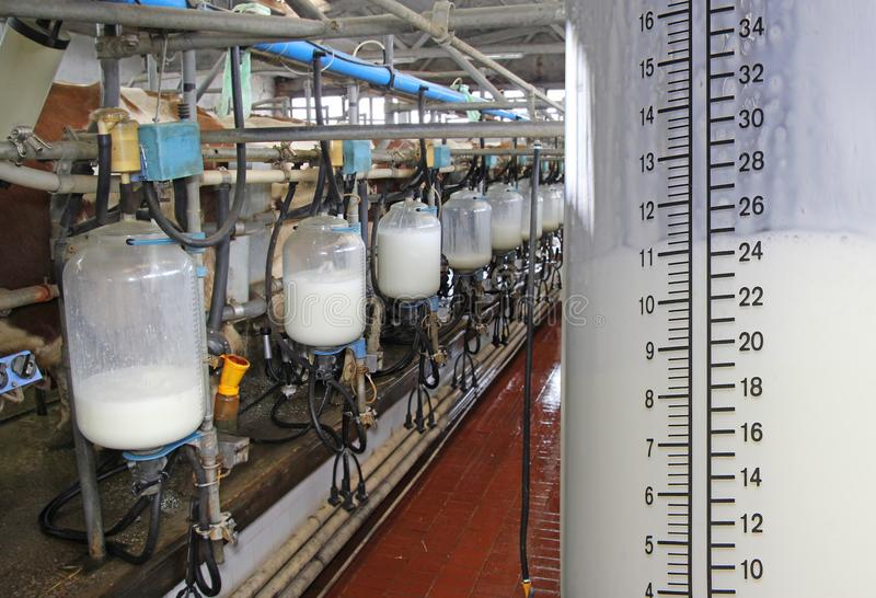 Botellas de relleno con leche en la granja lechera fotografía de archivo