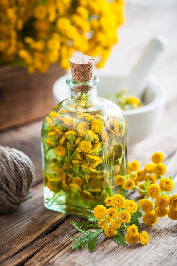 Botellas del tinte de las hierbas sanas del tansy, hierbas curativas en caja imagen de archivo