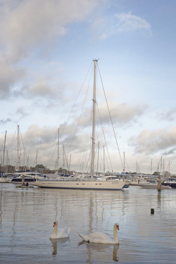 Boten en jachten die in haven worden vastgelegd, bursledon, Engeland, Europa swans royalty-vrije stock afbeelding