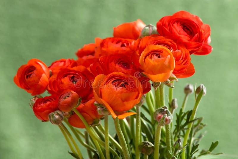Boterbloemen royalty-vrije stock foto