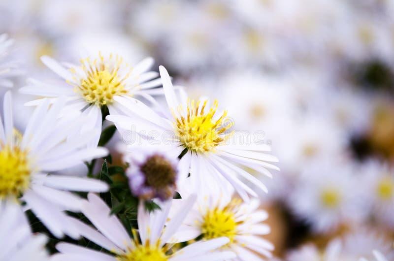 boterbloemen De weide van bloemen Bloemen in de weide stock afbeelding