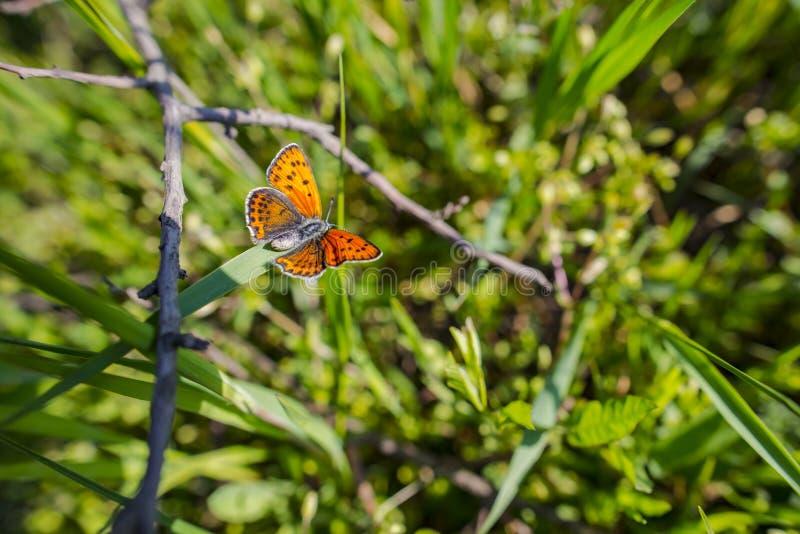 Botervliegweergave in de lente stock fotografie
