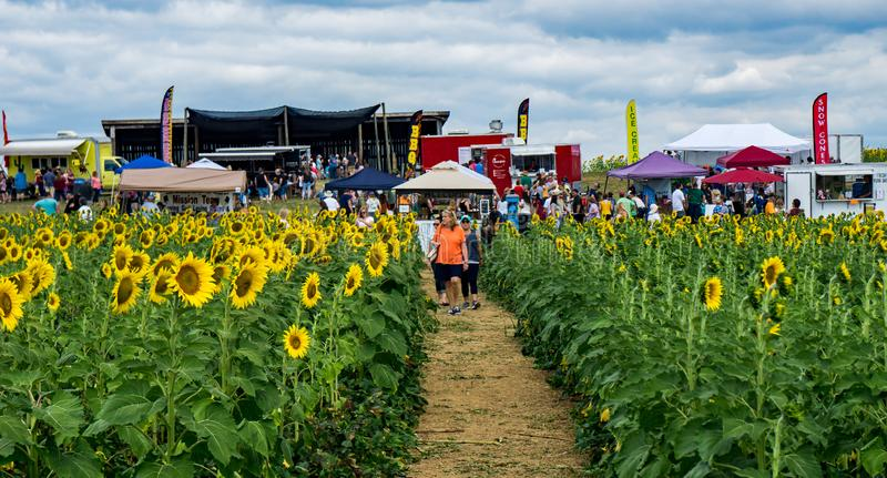 The Annual Sunflower Festival. Botetourt County, VA, September 7th: The Annual Sunflower Festival located at the Beaver Dam Farm in Botetourt County, Virginia royalty free stock photos
