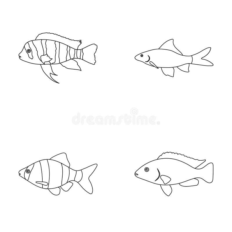 Botia, Clown, Piranha, Cichlid, Kolibri, Guppy, gesetzte Sammlungsikonen der Fische in der Entwurfsart vector Symbolvorrat stock abbildung