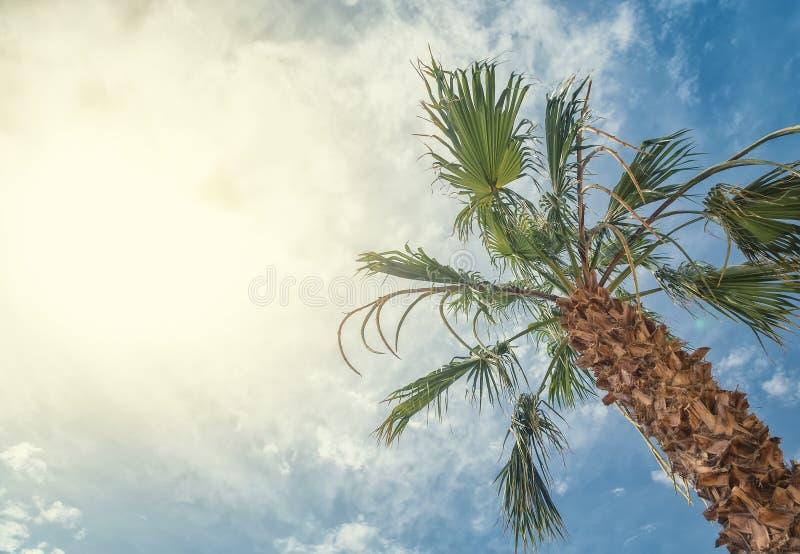 Botten-uppsikt av den härliga palmträdet med blå solig himmel fotografering för bildbyråer