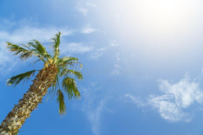 Botten-uppsikt av en härlig palmträd med blå solig himmel royaltyfri fotografi