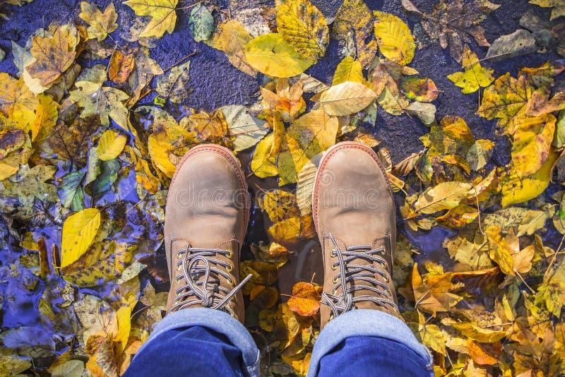Bottes de Brown avec l'arbre coloré de chute de feuille Le temps d'automne laisse à magma la vue supérieure photos libres de droits