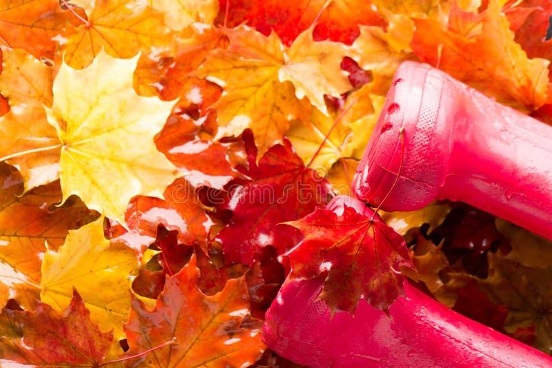 Bottes en caoutchouc d'enfants avec des feuilles d'érable d'automne Vue supérieure photos libres de droits