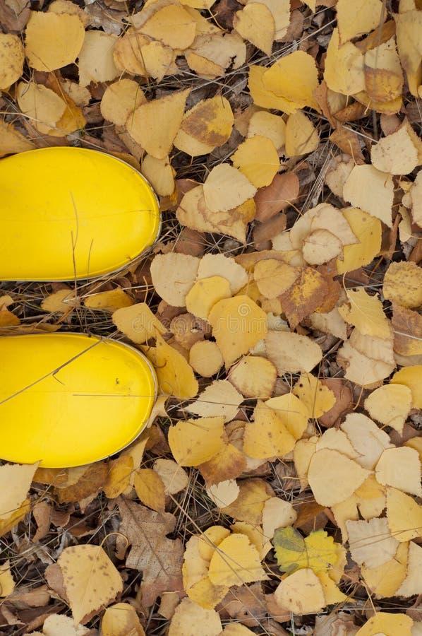 Bottes en caoutchouc jaunes sur un fond des feuilles d'automne image stock