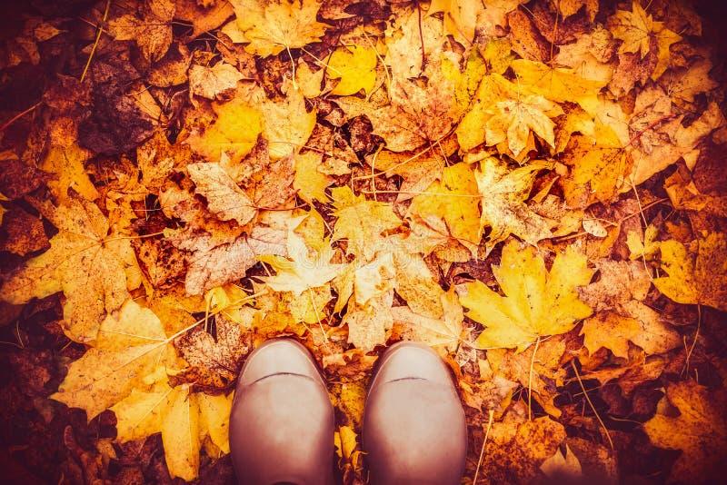 Bottes en caoutchouc sur des feuilles d'automne, vue supérieure, fond de nature de chute images stock