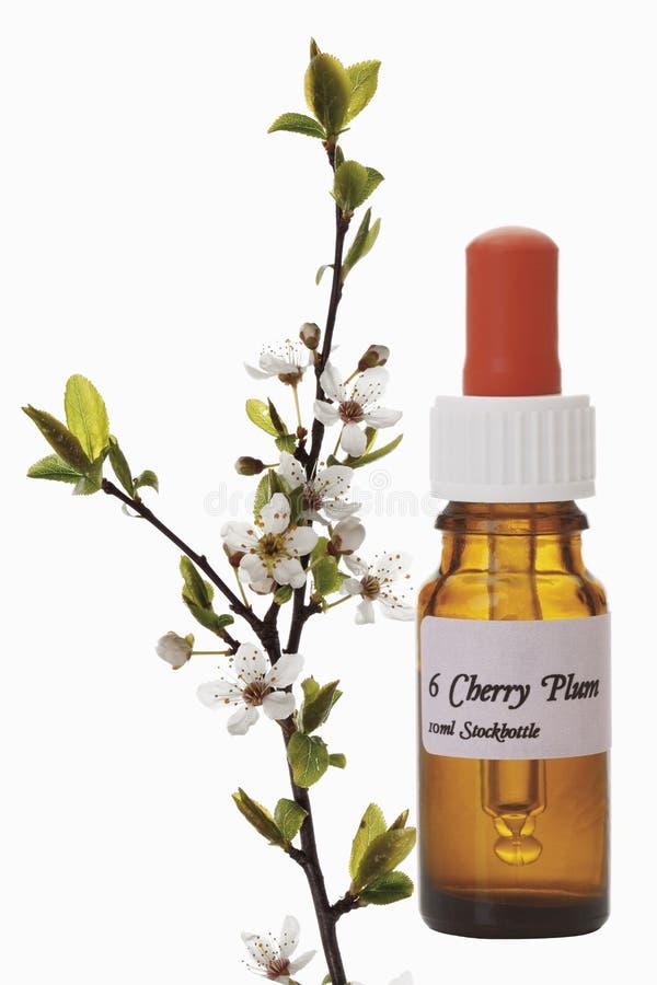 Bottiglia con il rimedio delle azione del fiore di Bach, Cherry Plum (prunus cerasifera) immagini stock