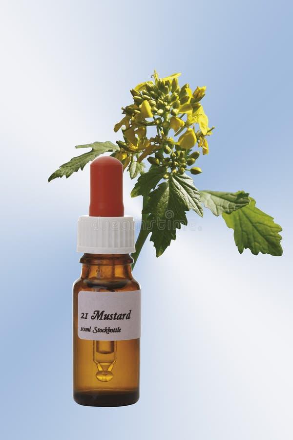 Bottiglia con il rimedio delle azione del fiore di Bach, senape (arvensis del Sinapis) fotografie stock