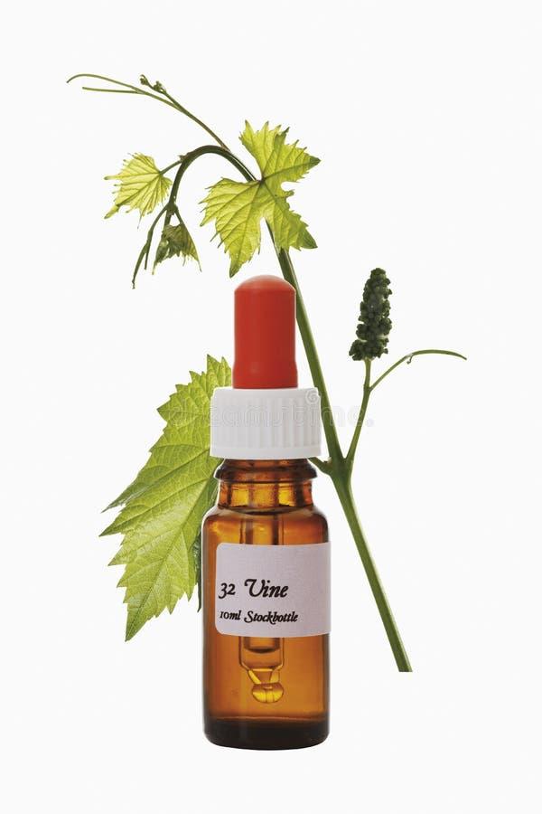 Bottiglia con il rimedio delle azione del fiore di Bach, vite (Vitis vinifera) immagini stock libere da diritti