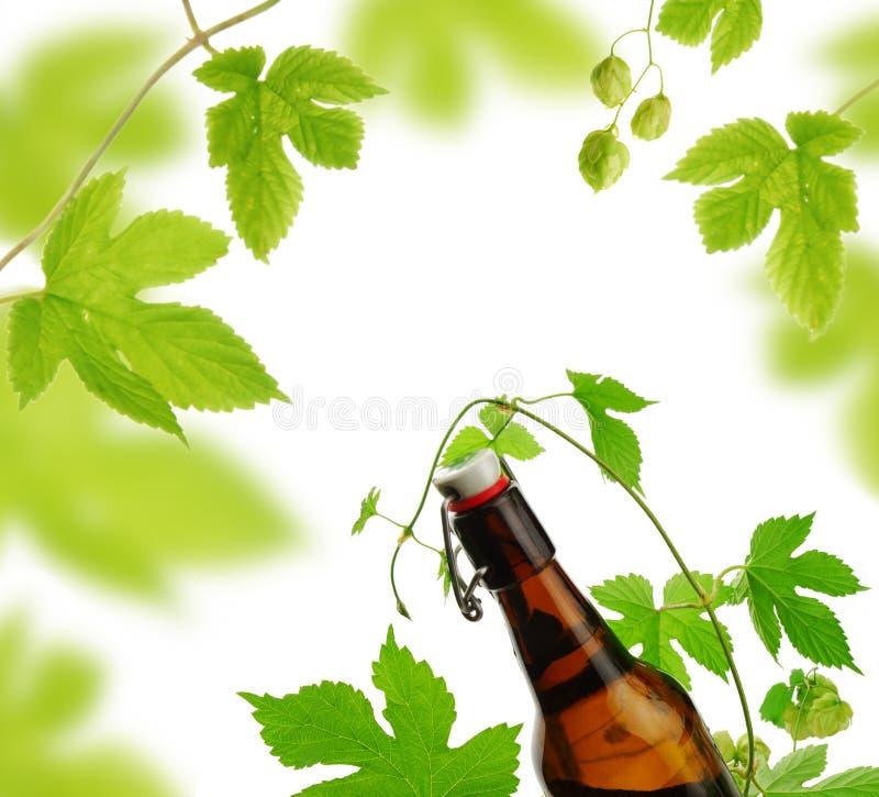Bottiglia da birra e luppoli fotografie stock libere da diritti