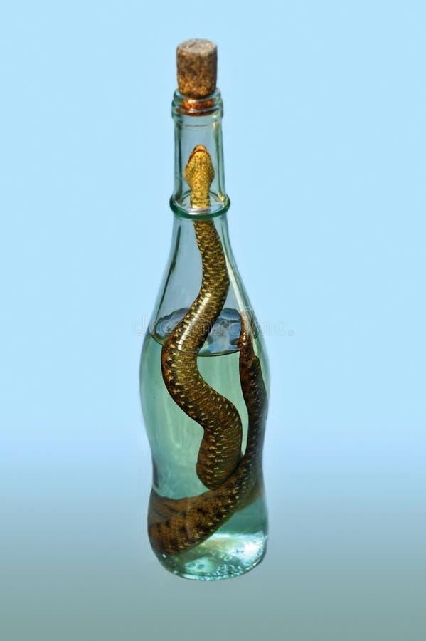 Bottiglia del liquore della vipera immagine stock libera da diritti