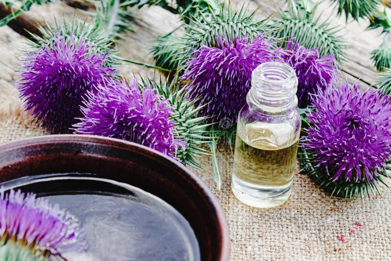 Bottiglia dell'olio essenziale del cardo selvatico con i fiori del cardo selvatico su fondo di legno fotografie stock libere da diritti