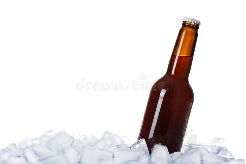Bottiglia di birra sui cubetti di ghiaccio fotografia stock libera da diritti