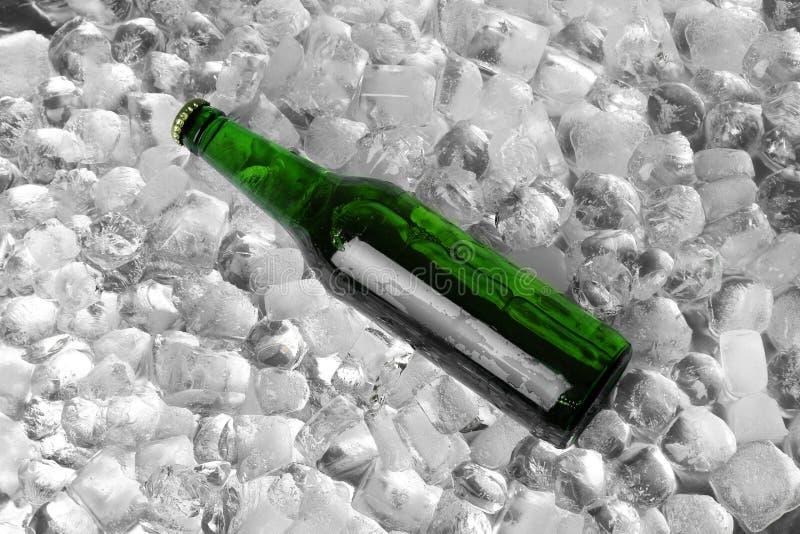 Bottiglia di birra sui cubetti di ghiaccio fotografia stock