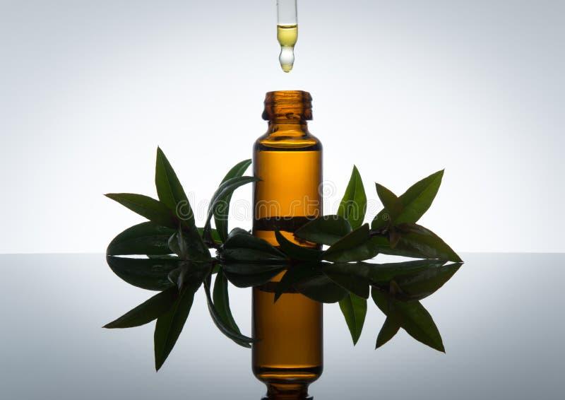Bottiglia di olio essenziale con le foglie del mirto, in vetro ambrato con il contagoccia fotografie stock libere da diritti