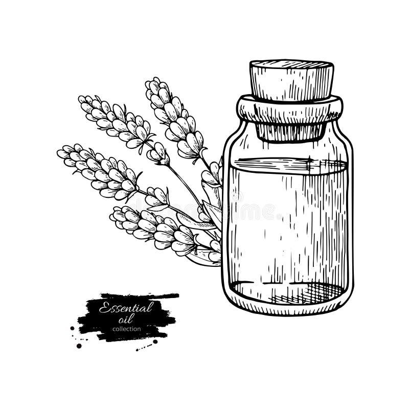 Bottiglia di olio essenziale di Lavander e mazzo di illustrazione disegnata a mano di vettore dei fiori Disegno isolato per l'aro royalty illustrazione gratis