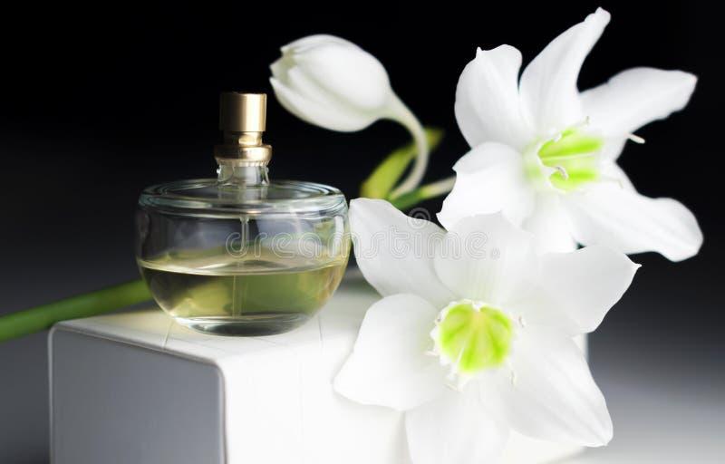Bottiglia di profumo, narciso bianco su un fondo scuro immagine stock