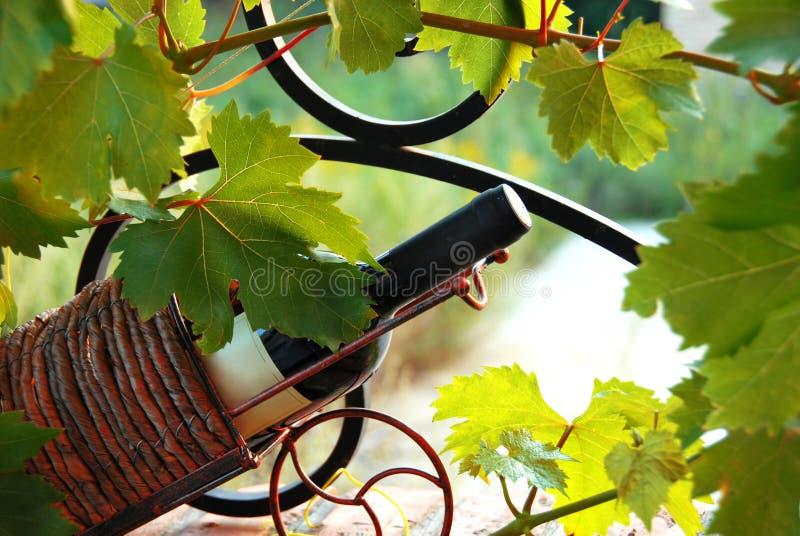 Bottiglia di vino fra i fogli della vite fotografie stock